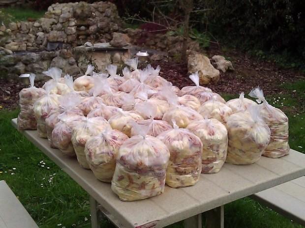 les sacs de poussins